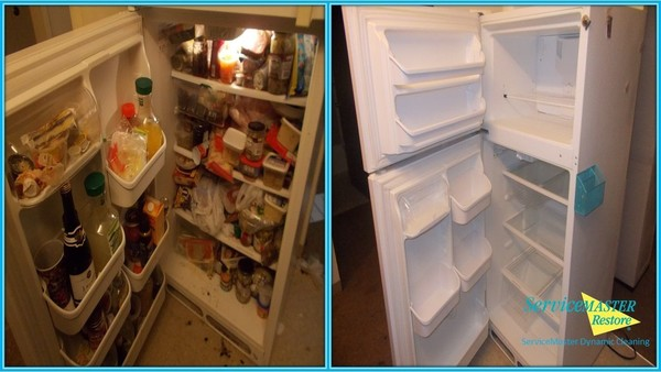Before & After Fridge Cleaning in Seffner, FL (1)